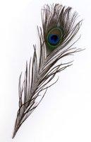 Pauwen veren 10 stuks 25-30 cm